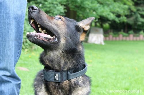 Halsband mit Griff - Hetzhalsband - Leine - Julius K9 - Hundesport Nubi