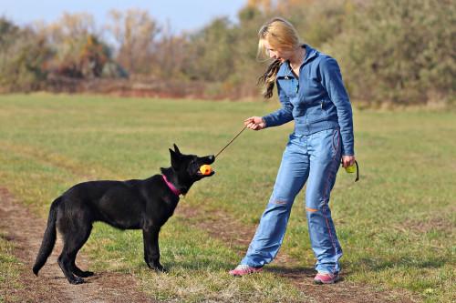 IDC neon Ball orange mit Wurfseil - Schäferhund - Hundespielzeug günstig online kaufen bei Hundesport Nubi