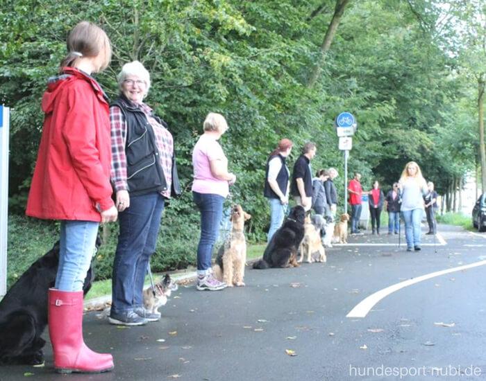 Begleithundeprüfung Straßenteil Hundesport Nubi