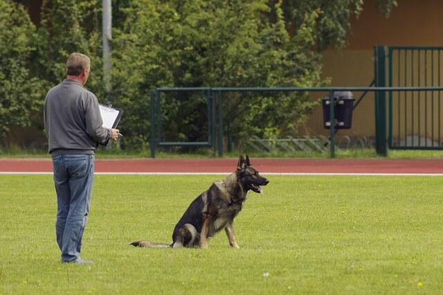 Hundesportarten Liste - Hundesport Nubi
