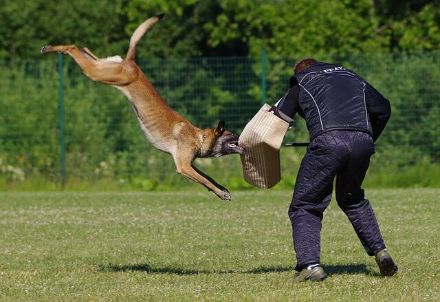 Hundesportarten Liste - Hundesport Nubi - IPO Schutzdienst