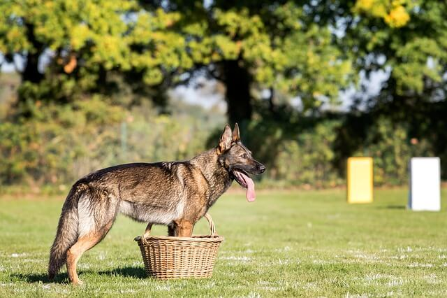 Hundesportarten Liste - Hundesport Nubi - Mondioring
