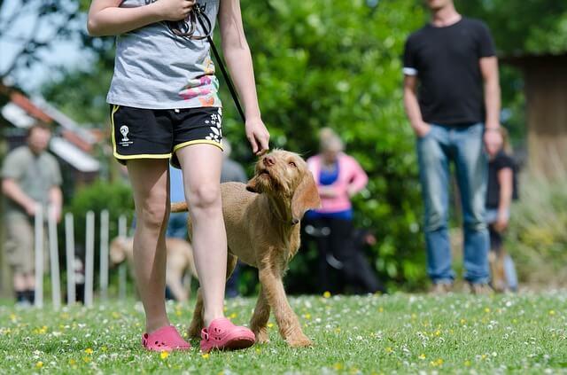 Hundesportarten Liste - Hundesport Nubi - Rally Obedience