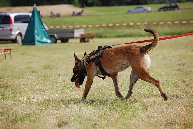 Hundesportarten Liste - Hundesport Nubi - Diensthund