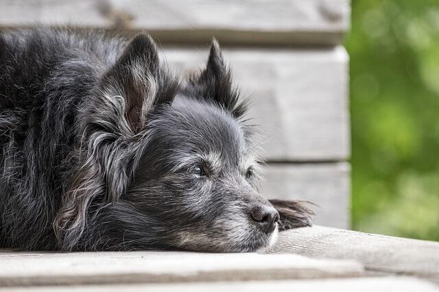 Hundesportarten Liste - Hundesport Nubi - alter Hund Mobility