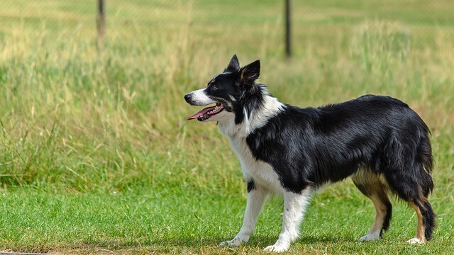 Hundesportarten Liste - Hundesport Nubi - Hütehund