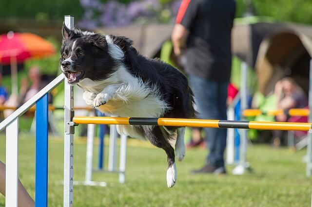 Hundesportarten Liste - Hundesport Nubi - Agility