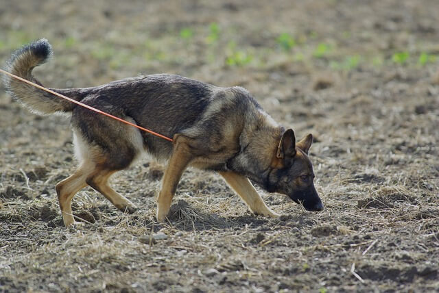 Hundesportarten Liste - Hundesport Nubi - Fährte