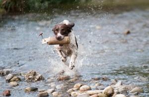 Hundesportarten Liste - Hundesport Nubi - Dummy