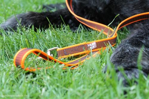 Leine Neon Orange Julius K9 Hund - Hundesport Nubi
