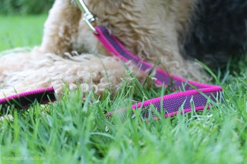 Leine Pink Julius K9 Airedale Terrier - Hundesport Nubi