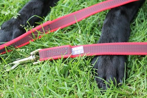 Leine Rot Julius K9 Labrador - Hundesport Nubi - Leinen günstig online kaufen