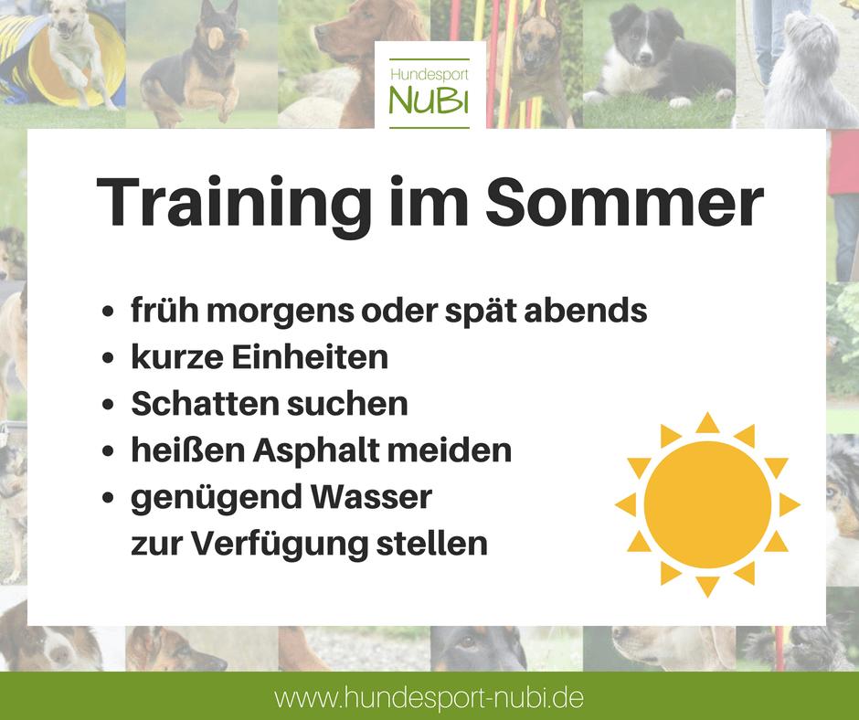 Training im Sommer - Hundesport Nubi