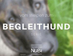 Vom Welpen zum Begleithund - Welpe -Begleithundeprüfung - Hundeblog - Hundesport Nubi