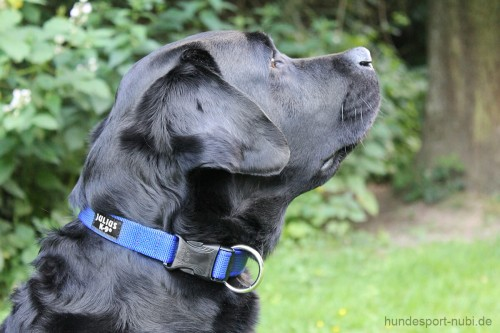 Halsband Julius K9 blau 39 - 65 cm Labrador - günstig online kaufen bei Hundesport Nubi