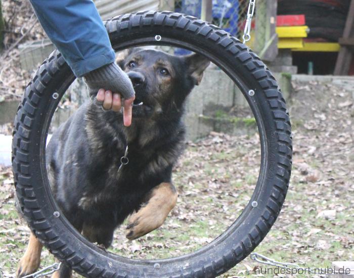 Hundesportarten Schäferhund Hundesport Nubi