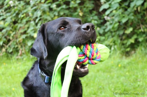 Kong Wubba Weaves, Labrador - quietschendes Hundespielzeug günstig online kaufen bei Hundesport Nubi