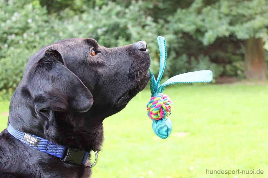 Kong Wubba Spielzeug Labrador 2 - Hundesport Nubi
