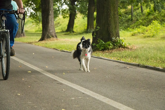 Training im Sommer - Radfahren mit Hund - Hundesport Nubi