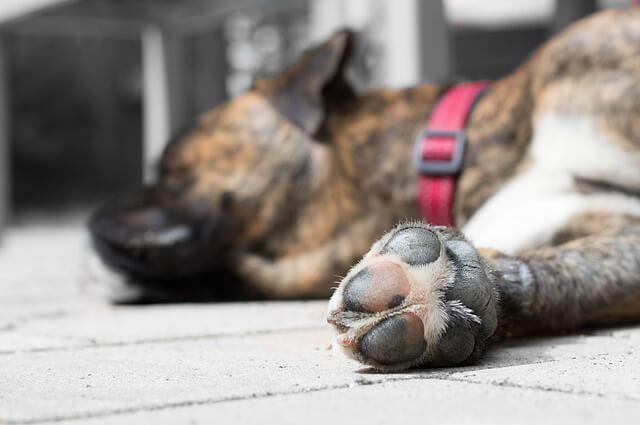 Training im Sommer - Tipps - Hundesport Nubi