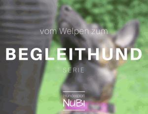 Vom Welpen zum Begleithund - Welpe -Begleithundeprüfung, Teil zwei - Malinois Wollie - Hundesport Nubi