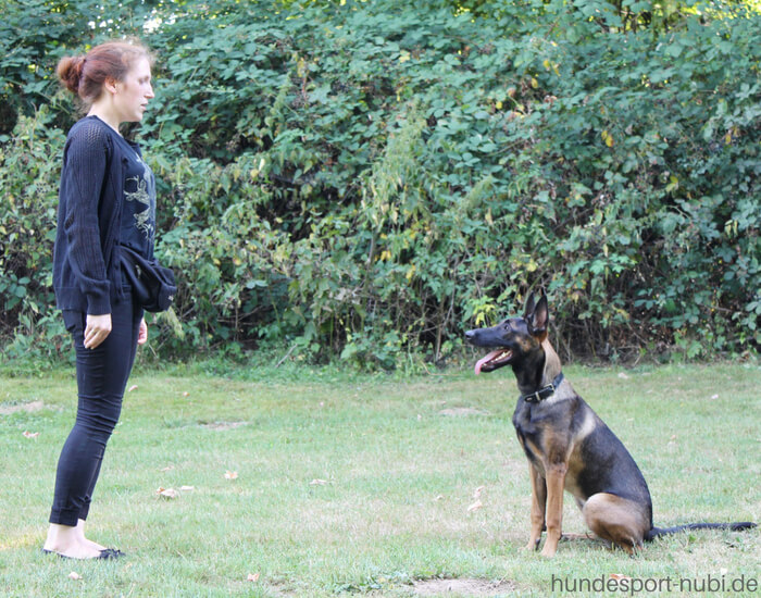 Vom Welpen zum Begleithund - Welpe -Begleithundeprüfung - Hundesport Nubi