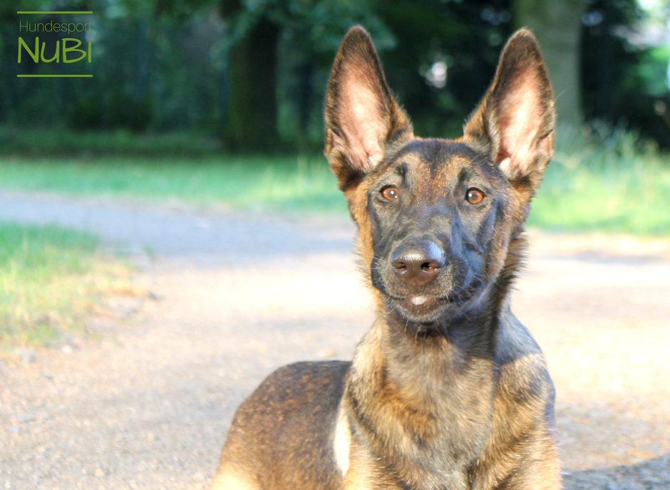Sommer Essentials - Hundespielzeug - Malinois - Hundesport Nubi -Shop