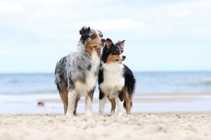 Sommer Essentials für den Hund - Hundesport Nubi - Shop - Australian Shepherds