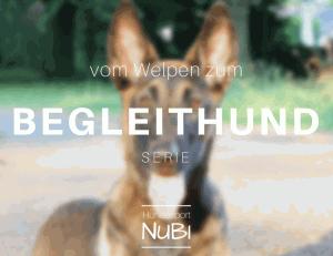 Hitzewelle - Training im Sommer- Begleithundeprüfung -Vom Welpen zum Begleithund - Malinois - Hundesport Nubi