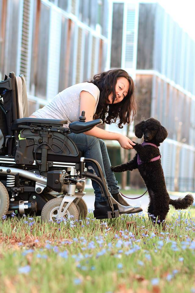 Training unter Ablenkung - Hundetraining - Erziehung - Hundesport Nubi
