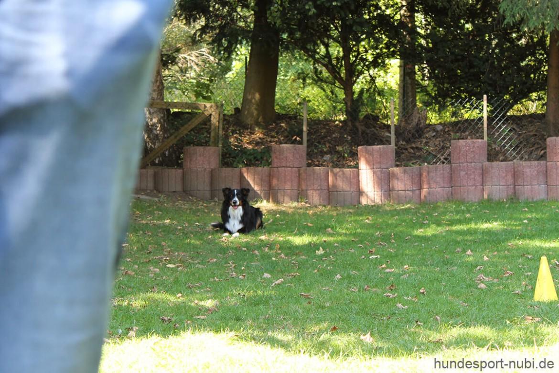 Neue Prüfungsordnung Begleithundeprüfung - Laufschema und Ablage - Hundesport Nubi