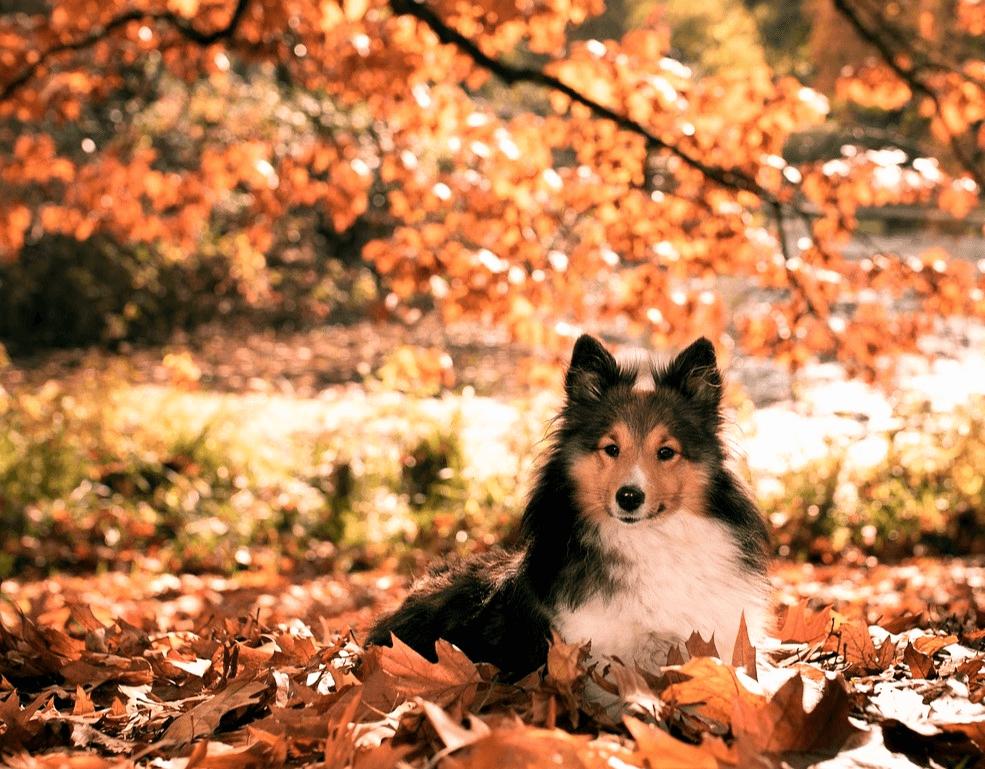 Gesunder Hund Im Herbst Sicherheit Und Sichtbarkeit Hundesport Nubi