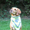 Halstuch für Hunde neongelb reflektierend - Signalfarbe - Sicherheit - Hundesport Nubi - Shop für aktive Hunde