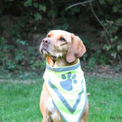 Halstuch für Hunde neongelb reflektierend - Signalfarbe - Sicherheit - Hundezubehör hier günstig online kaufen: Hundesport Nubi - Shop für aktive Hunde