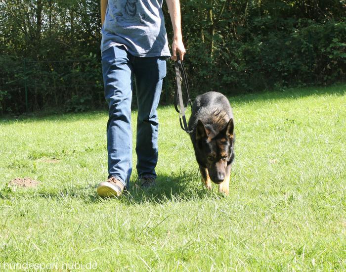 Laufenan lockerer Leine - Trainingstipps für Alltag und Sport mit dem Hund [Blogparade]