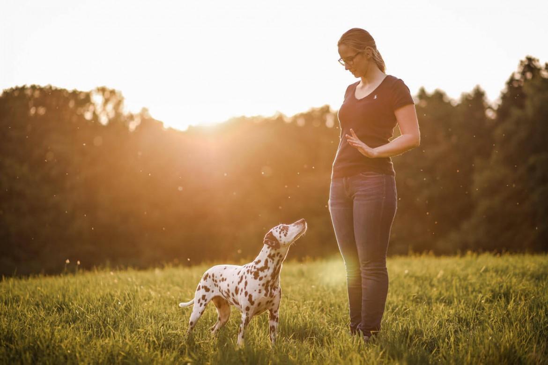 Pause im Hundetraining - Hundesport Nubi - Bothshunde (4)