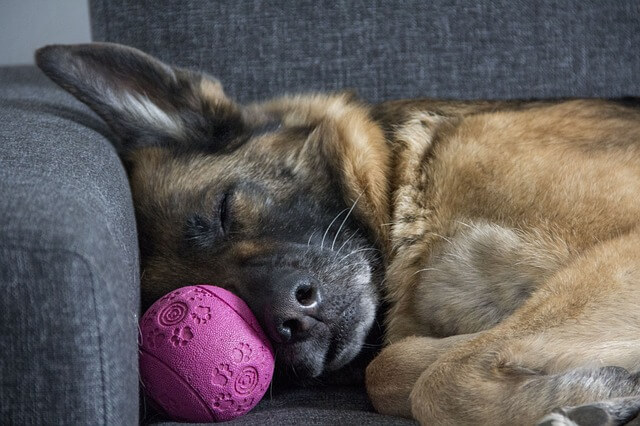 Pause im Hundetraining - Hundesport Nubi - Bothshunde