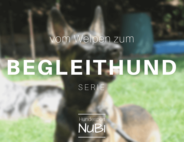 Training unter Ablenkung- Vom Welpen zum Begleithund - Welpe -Begleithundeprüfung - Hundesport Nubi