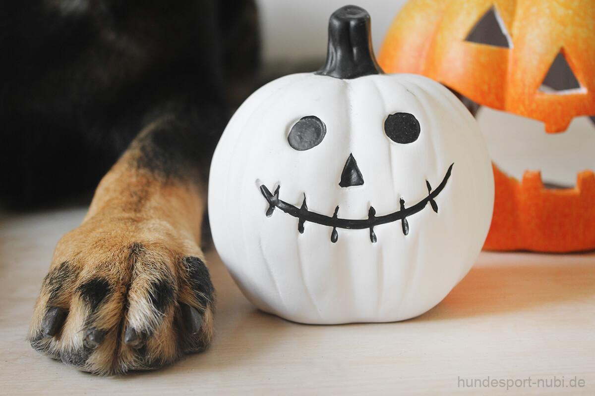 Halloween mit Hund - Dekoration und Hundepfote - Hundesport Nubi