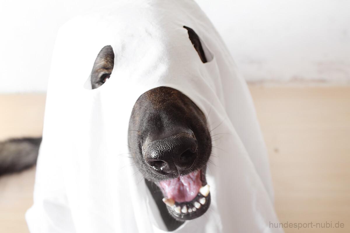 Halloween mit Hund - Schäferhund verkleidet als Gespenst - Hund verkleiden - Hundesport Nubi