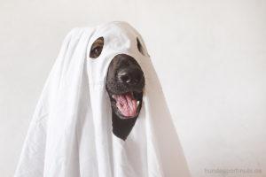 Halloween mit Hund - Schäferhund verkleidet als Gespenst - Hundesport Nubi