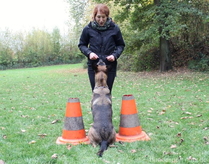 Vom Welpen zum Begleithund - Vorsitz - pubertärer Junghund - Hundesport Nubi - Onlineshop für aktive Hunde