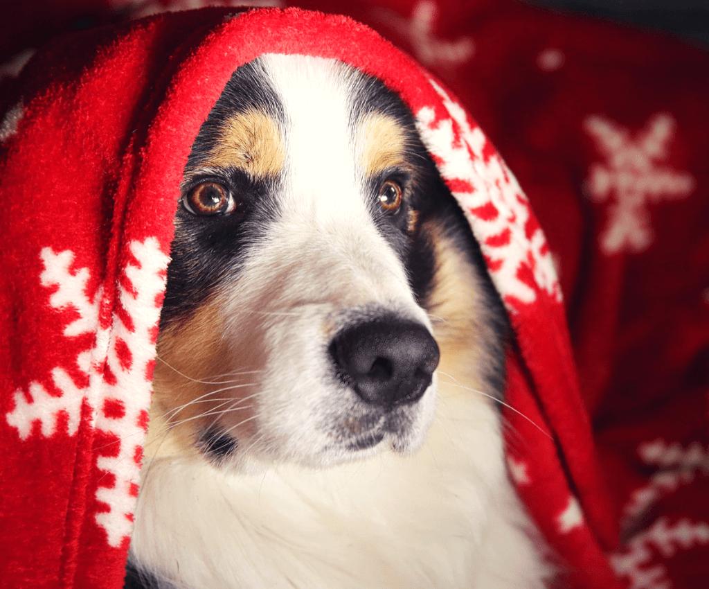 Weihnachtsgeschenke 20.Geschenke Für Hundesportler 20 Ideen Was Du Weihnachten Schenken