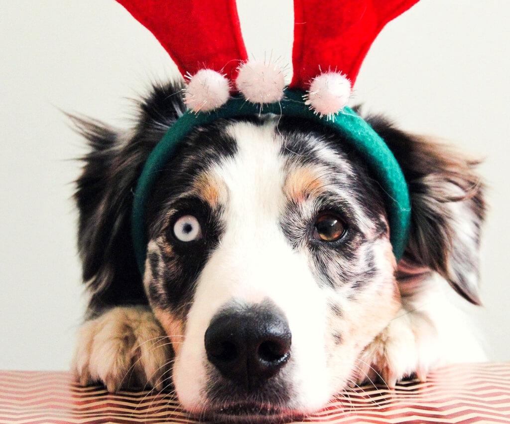 Weihnachtsgeschenke Geschenke.Geschenke Für Hundesportler 20 Ideen Was Du Weihnachten Schenken