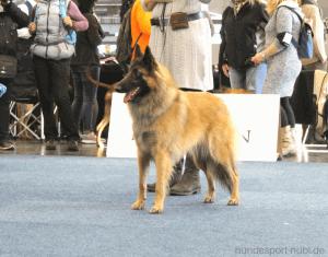 Hundemesse Hund und Pferd in Dortmund - belgischer Schäferhund Tervueren - Messe VDH Westfallenhallen - Hundesport Nubi - Onlineshop für aktive Hunde