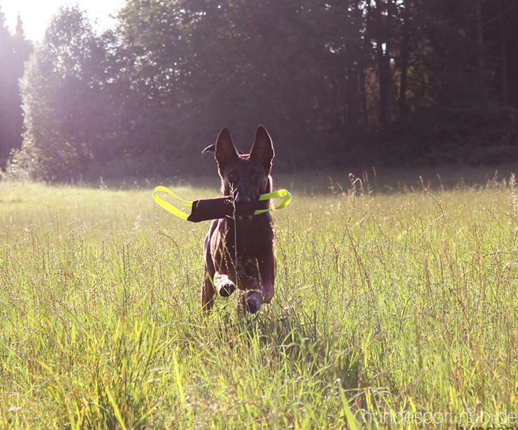 Nikolaus Gewinnspiel - Hundespielzeug - Hundesport Nubi - Shop für aktive Hunde