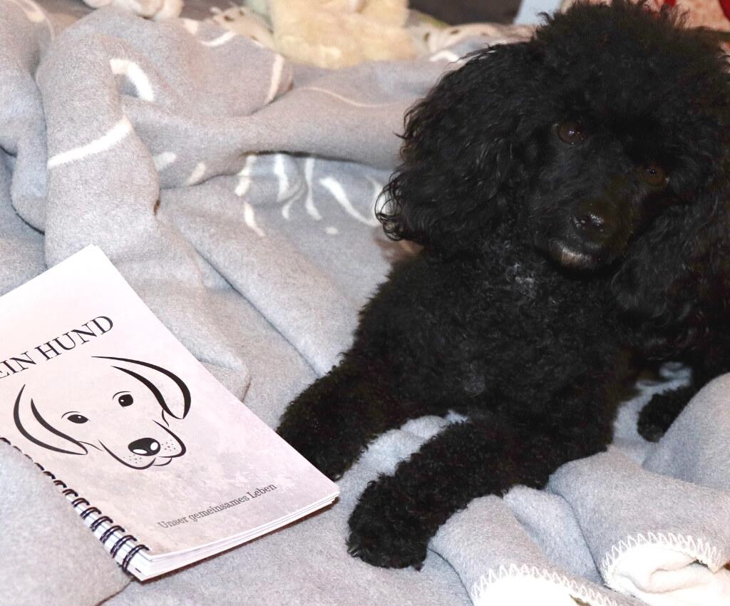 Nikolaus Gewinnspiel - Hundesport Nubi - Shop für aktive Hunde