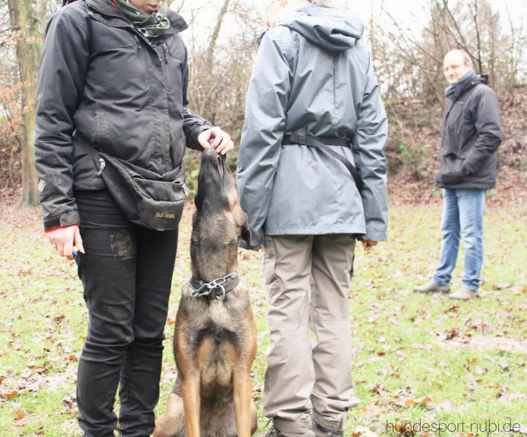 Begleithundeprüfung mit 15 Monaten_ Vom Welpen zum Begleithund - Gruppenübung - Hundesport Nubi - Shop für aktive Hunde (2)