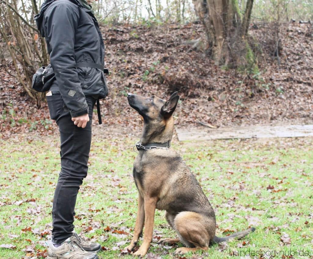 Begleithundeprüfung mit 15 Monaten_ Vom Welpen zum Begleithund - Vorsitz - Hundesport Nubi - Shop für aktive Hunde (1)
