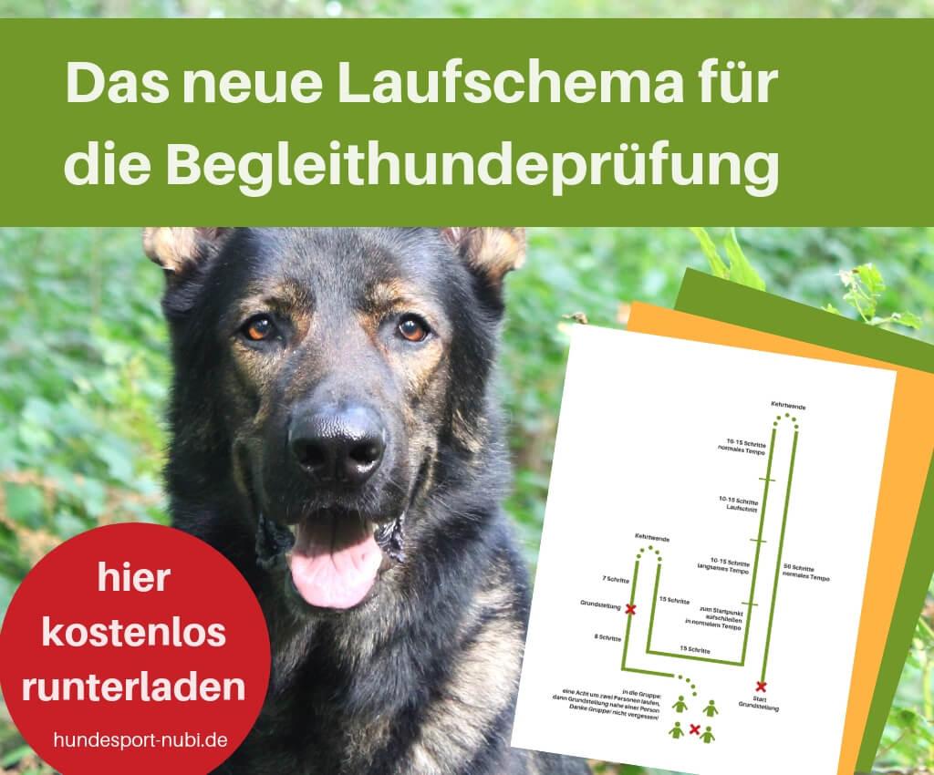 Das neue Laufschema für die Begleithundeprüfung zum Ausdrucken - kostenloser Download und Video - Hundesport Nubi - Shop für aktive Hunde